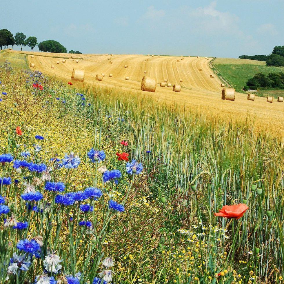 politiche agricole